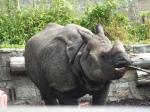 Edinburgh Zoo, rhino