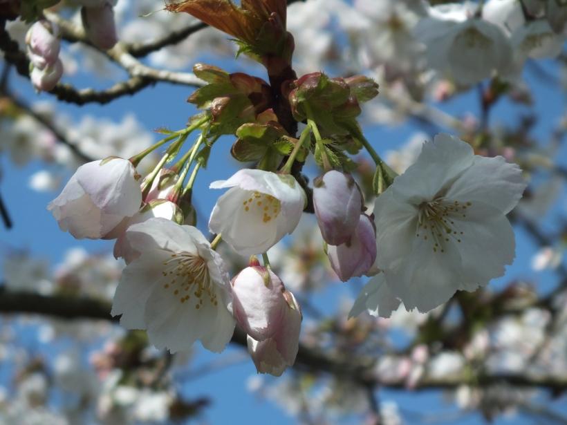 blossom on tree, spring,
