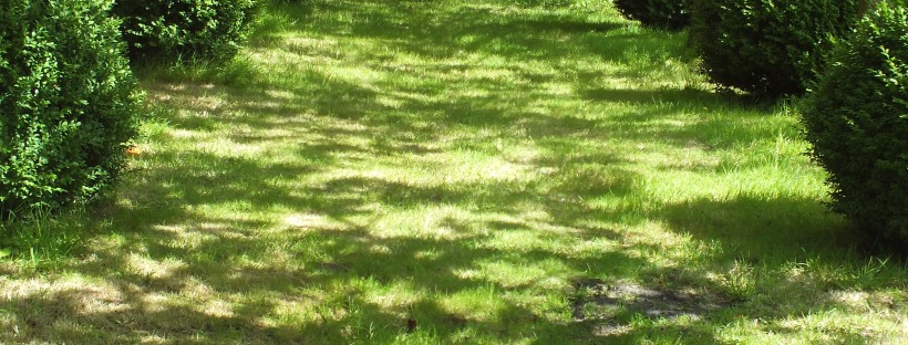 last days of summer, grass, dappled sunlight