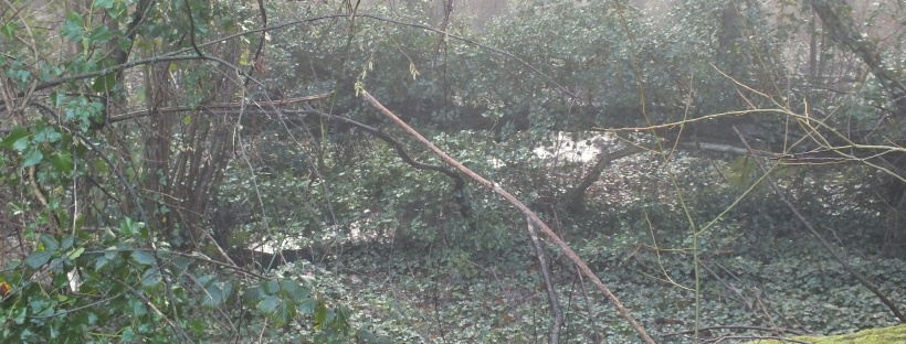 ivy in woods, fallen tree